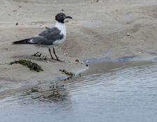 web-Trull-RR-bird-walk-by-Gerry-Beetham-24Aug2021-12