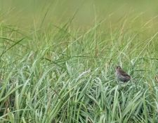 web-Trull-RR-bird-walk-by-Gerry-Beetham-24Aug2021-13