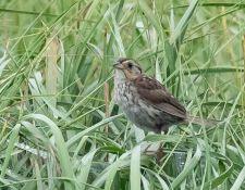 web-Trull-RR-bird-walk-by-Gerry-Beetham-24Aug2021-14