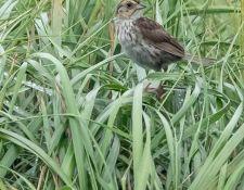 web-Trull-RR-bird-walk-by-Gerry-Beetham-24Aug2021-15