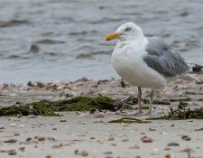 web-Trull-RR-bird-walk-by-Gerry-Beetham-24Aug2021-21
