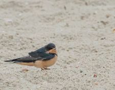 web-Trull-RR-bird-walk-by-Gerry-Beetham-24Aug2021-24