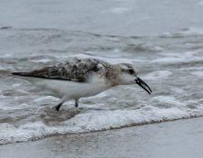 web-Trull-RR-bird-walk-by-Gerry-Beetham-24Aug2021-27