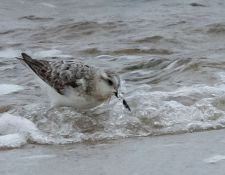 web-Trull-RR-bird-walk-by-Gerry-Beetham-24Aug2021-28