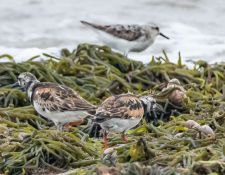 web-Trull-RR-bird-walk-by-Gerry-Beetham-24Aug2021-30