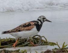 web-Trull-RR-bird-walk-by-Gerry-Beetham-24Aug2021-35