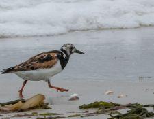 web-Trull-RR-bird-walk-by-Gerry-Beetham-24Aug2021-36