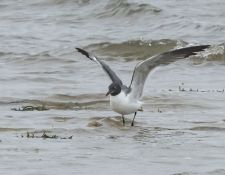 web-Trull-RR-bird-walk-by-Gerry-Beetham-24Aug2021-41