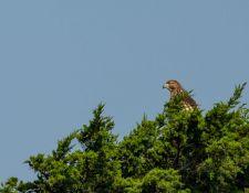 web-Trull-RR-bird-walk-by-Gerry-Beetham-26Aug2021-16