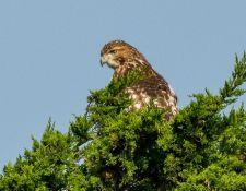 web-Trull-RR-bird-walk-by-Gerry-Beetham-26Aug2021-17