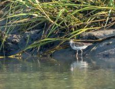 web-Trull-RR-bird-walk-by-Gerry-Beetham-26Aug2021-18