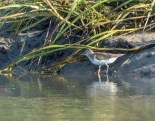 web-Trull-RR-bird-walk-by-Gerry-Beetham-26Aug2021-19