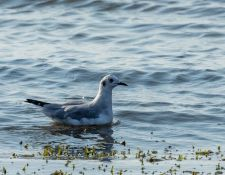 web-Trull-RR-bird-walk-by-Gerry-Beetham-26Aug2021-20