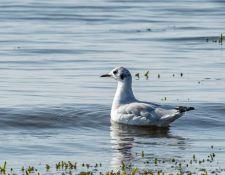 web-Trull-RR-bird-walk-by-Gerry-Beetham-26Aug2021-21