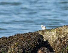 web-Trull-RR-bird-walk-by-Gerry-Beetham-26Aug2021-24