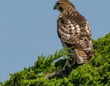 web-Trull-RR-bird-walk-by-Gerry-Beetham-26Aug2021-26