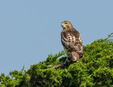 web-Trull-RR-bird-walk-by-Gerry-Beetham-26Aug2021-28