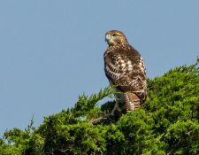 web-Trull-RR-bird-walk-by-Gerry-Beetham-26Aug2021-29