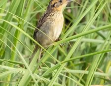 web-Trull-RR-bird-walk-by-Gerry-Beetham-7Aug202130