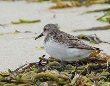 web-Trull-RR-bird-walk-by-Gerry-Beetham-19Aug2021-39