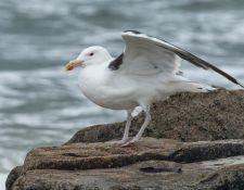 web-Trull-RR-bird-walk-by-Gerry-Beetham-19Aug2021-40