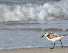 web-Trull-RR-bird-walk-by-Gerry-Beetham-31Aug2021-17