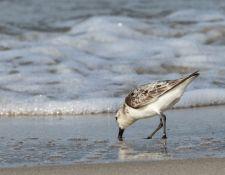 web-Trull-RR-bird-walk-by-Gerry-Beetham-31Aug2021-18