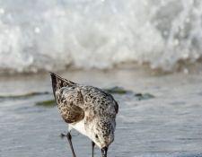 web-Trull-RR-bird-walk-by-Gerry-Beetham-31Aug2021-19