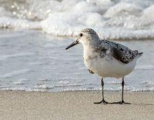 web-Trull-RR-bird-walk-by-Gerry-Beetham-31Aug2021-21