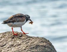 web-Trull-RR-bird-walk-by-Gerry-Beetham-31Aug2021-22