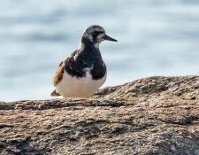 web-Trull-RR-bird-walk-by-Gerry-Beetham-31Aug2021-23