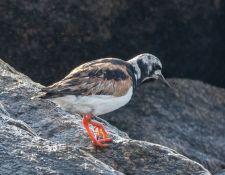 web-Trull-RR-bird-walk-by-Gerry-Beetham-31Aug2021-27