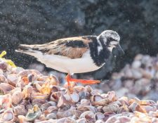 web-Trull-RR-bird-walk-by-Gerry-Beetham-31Aug2021-30
