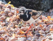 web-Trull-RR-bird-walk-by-Gerry-Beetham-31Aug2021-31