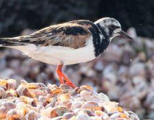 web-Trull-RR-bird-walk-by-Gerry-Beetham-31Aug2021-32