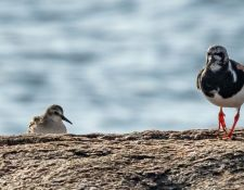 web-Trull-RR-bird-walk-by-Gerry-Beetham-31Aug2021-33