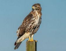 web-Trull-RR-bird-walk-by-Gerry-Beetham-3Sept2021-13