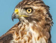 web-Trull-RR-bird-walk-by-Gerry-Beetham-3Sept2021-16