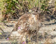 web-Trull-RR-bird-walk-by-Gerry-Beetham-3Sept2021-17