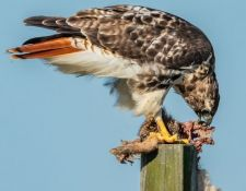 web-Trull-RR-bird-walk-by-Gerry-Beetham-3Sept2021-18