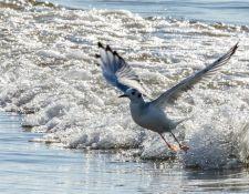 web-Trull-RR-bird-walk-by-Gerry-Beetham-3Sept2021-19