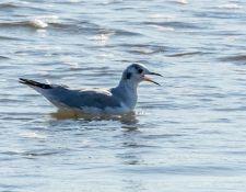 web-Trull-RR-bird-walk-by-Gerry-Beetham-3Sept2021-20