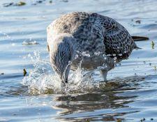 web-Trull-RR-bird-walk-by-Gerry-Beetham-3Sept2021-23