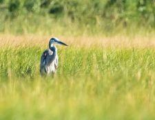 web-Trull-RR-bird-walk-by-Gerry-Beetham-3Sept2021-24