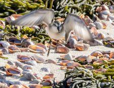 web-Trull-RR-bird-walk-by-Gerry-Beetham-3Sept2021-26