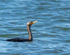 web-Trull-RR-bird-walk-by-Gerry-Beetham-3Sept2021-29