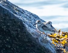 web-Trull-RR-bird-walk-by-Gerry-Beetham-3Sept2021-30