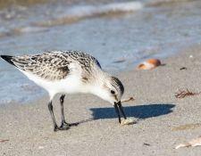 web-Trull-RR-bird-walk-by-Gerry-Beetham-3Sept2021-32