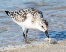 web-Trull-RR-bird-walk-by-Gerry-Beetham-3Sept2021-33