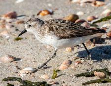 web-Trull-RR-bird-walk-by-Gerry-Beetham-3Sept2021-36